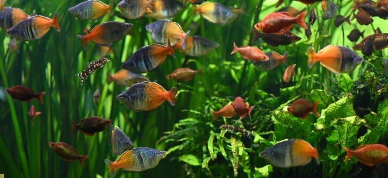 Aquarium and school of fish