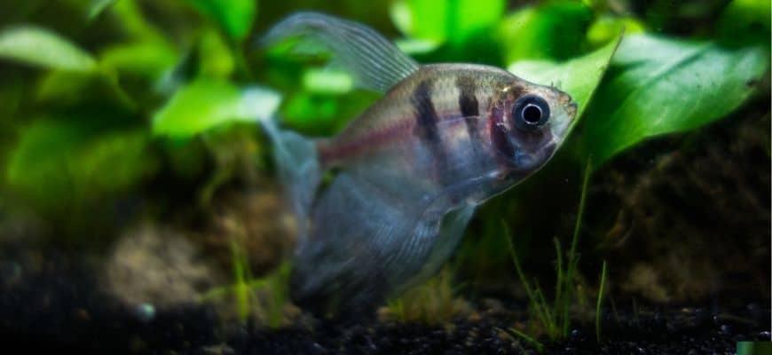 Fish in the aquarium with plants