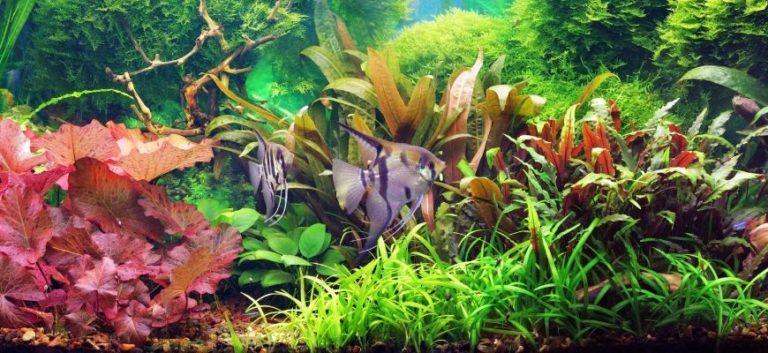 assorted aquarium plants with fish