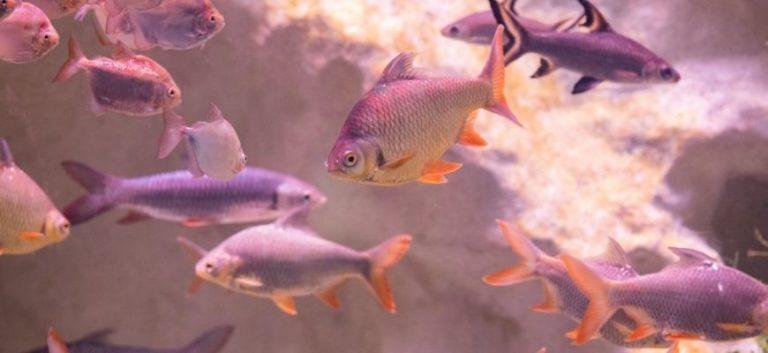 School of fish in an aquarium