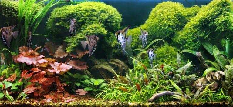 Various aquarium plants with fishes