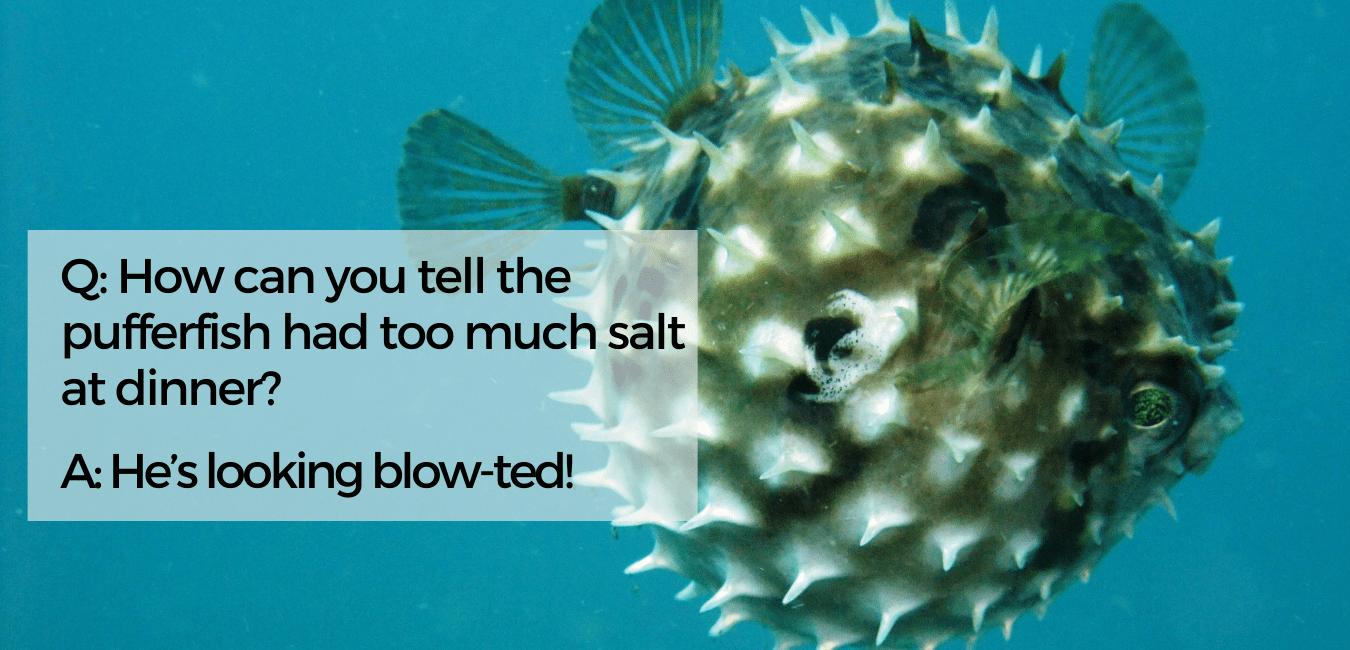 Puffer Fish Meme 4