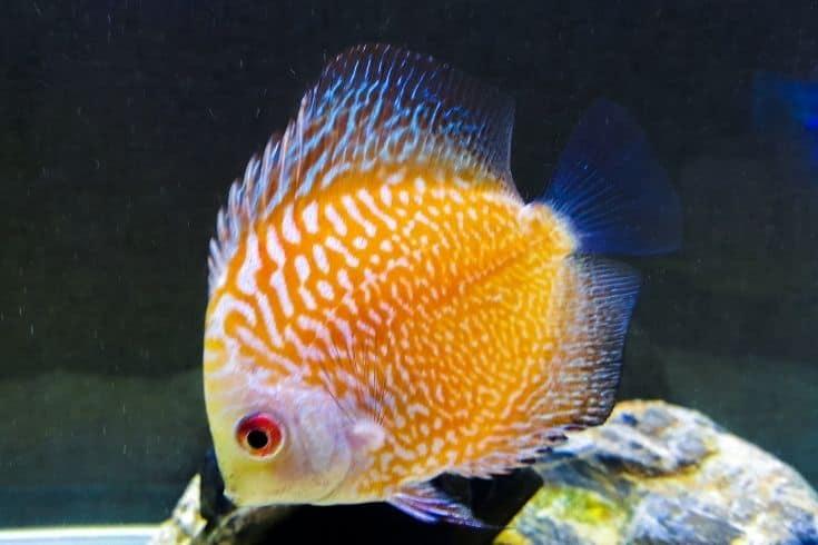 Discuss fish in aquarium
