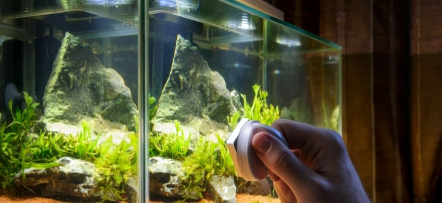 Home aqurium cleaning using magnetic fish tank cleaner