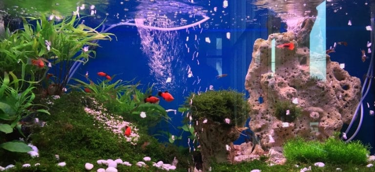 small fish tank with red orange fishes