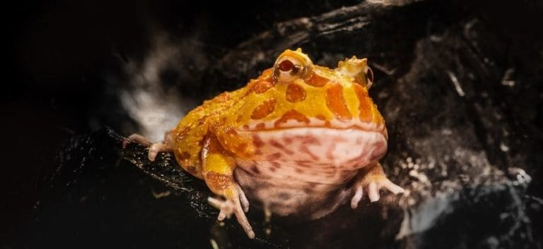 Close up picture of a frog