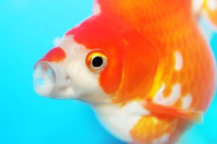 Gasping Fish