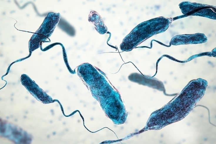 microscopic view of Vibrio bacteria